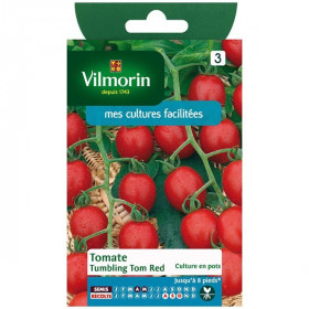 Sachet graines Tomate tumbling Tom Red