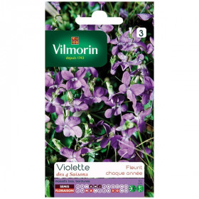 Fragrant violet 4 seasons