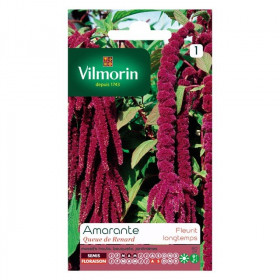 Amaranth tail of fox Vilmorin