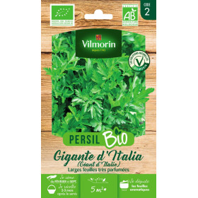 Italian Giant Parsley Seed Bag ORGANIC - Petroselinum sativum