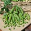 King Pea Seeds Canned - 5 kg bag