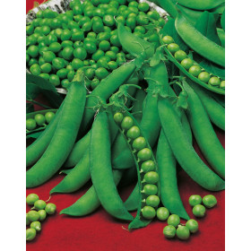 Guilloteaux Serpette Pea Seeds - 5 kg bag