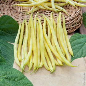 Rocquencourt Bean Seeds - 5 kg bag