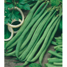 Talisman Cordless Bean Seeds - 5 kg bag