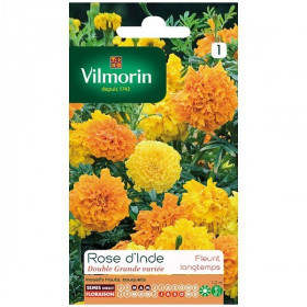 Product sheet Rose d'inde double large variety