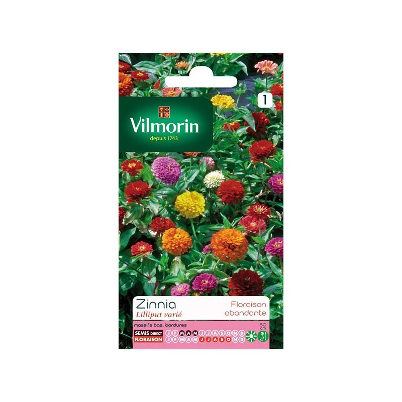 Product sheet Zinnia Lilliput variety