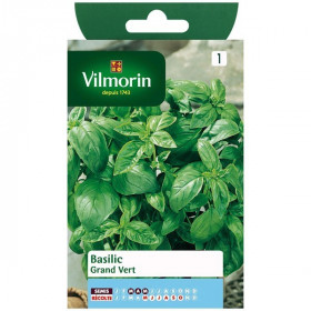 Product sheet Basil Grand vert