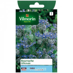 Product sheet Borage Officinale