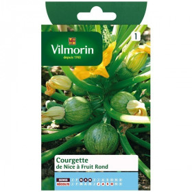Product sheet Courgette de nice with round fruit