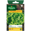 Lettuce golden yellow Gotte