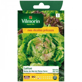 Gotte lettuce yellow gold